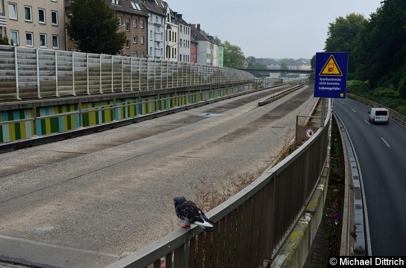 Am Anfang der Spurbussrecke wartet diese Taube leider vergeblich auf den Bus.