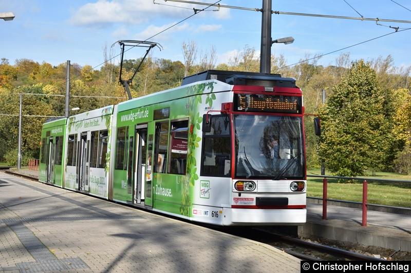 TW 616 als Linie 5 am Zoopark.